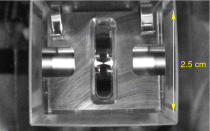 Photograph of the single atom trap